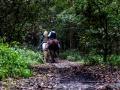Cavallin nel bosco giuseppe filisetti