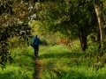 Christian Gerardini - Passeggiata nel bosco.jpg