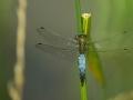 marco marchetti macro la libellula
