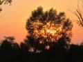 eleonora-longo-sunshine-058