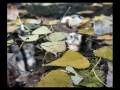 giancarlo-ubiali-foglie-di-pioppo